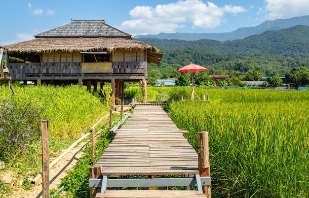 Casa de campo em campos de almofada verdes do arroz e em ponte de madeira da maneira.