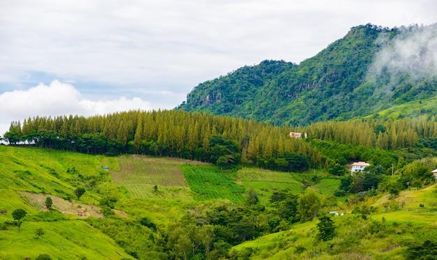Casa de exibição de paisagem na colina de wat phra que pha filho kaew em khao kho, phetchabun