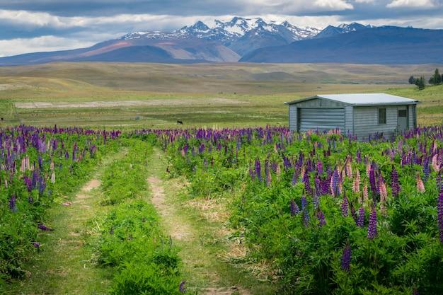 Casa de fazenda no campo lupin perto do lago tekapo