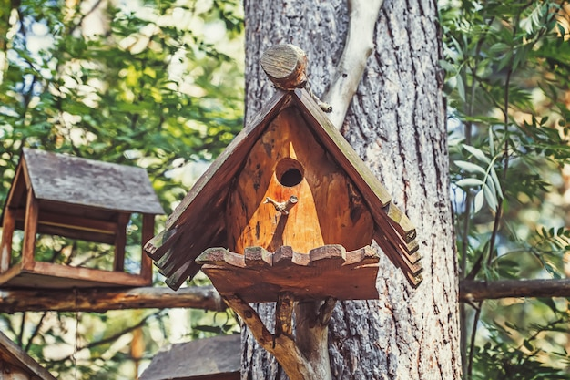 Casa de madeira do pássaro, caixa de ninho na árvore na floresta
