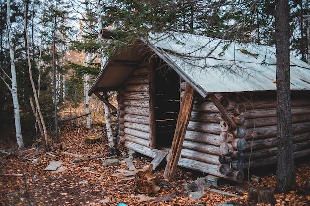 Casa de madeira marrom na floresta