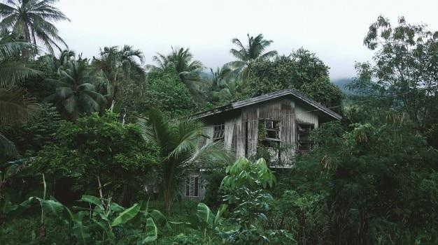 Casa de madeira na selva