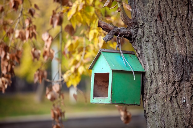 Casa de passarinho de madeira de cor verde na árvore