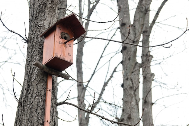 Casa de passarinho em uma árvore em uma floresta