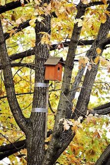 Casa de passarinho em uma árvore