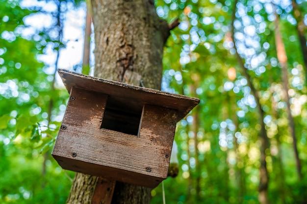 Casa de passarinho na floresta no tronco de uma árvore