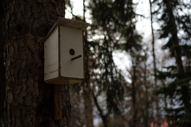 Casa de passarinho para pássaros montados em uma árvore