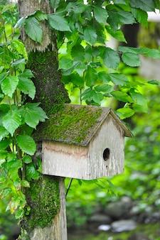Casa de passarinho pendurado em uma árvore