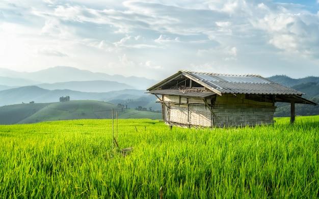 Casa do fazendeiro localizada no meio do campo de arroz. cenário e a beleza da natureza.