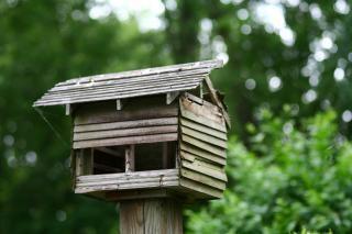 Casa do pássaro, árvore