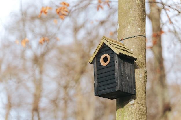 Casa do pássaro em uma velha árvore