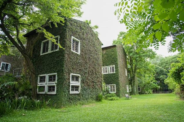 Casa e janela branca com videira na parede