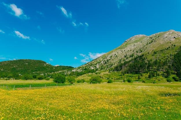 Casa em um prado com flores amarelas da vila njegusi
