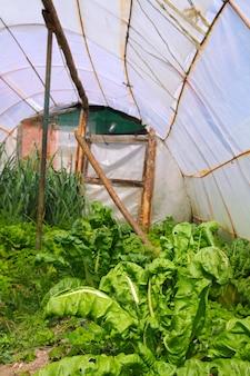 Casa jardim acelga legumes com efeito de estufa