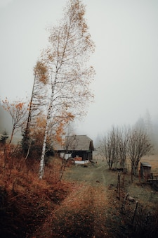 Casa marrom perto de árvores