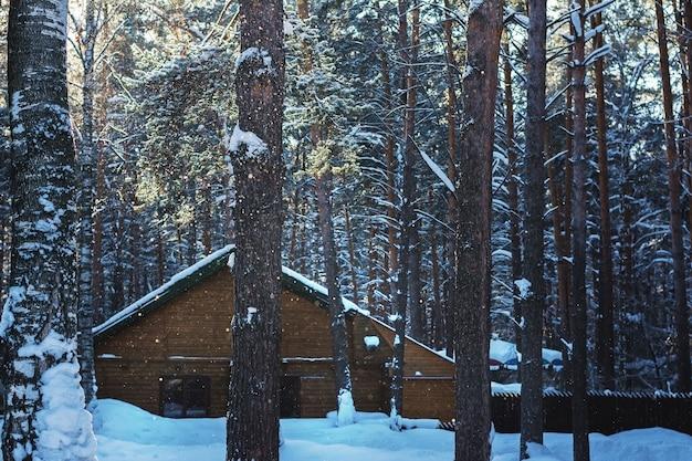 Casa na floresta de pinheiros de inverno