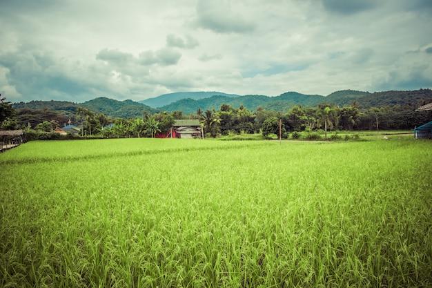 Casa no meio da paisagem verde, natureza ao ar livre