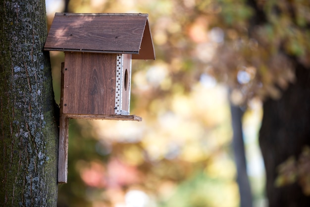 Casa nova marrom de madeira do pássaro ou caixa de assentamento anexada ao tronco de árvore no parque ou na floresta do outono no fundo amarelo dourado ensolarado borrado do bokeh da folha.