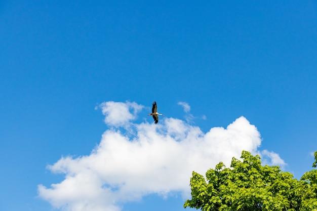 Casa para a migração de cegonhas em céu ensolarado