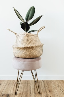 Casa planta ficus elastica robusta em saco de palha no banquinho na superfície branca.