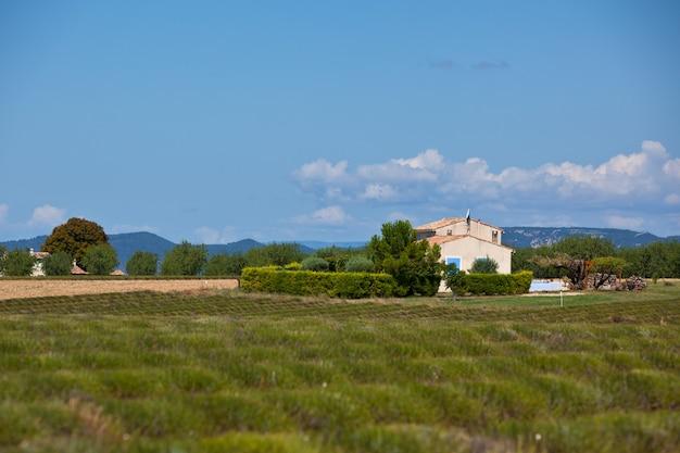 Casa rural em um campo colhido de lavanda, valensole, provence, frança