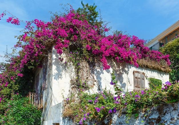 Casa velha abandonada com árvore florida no telhado