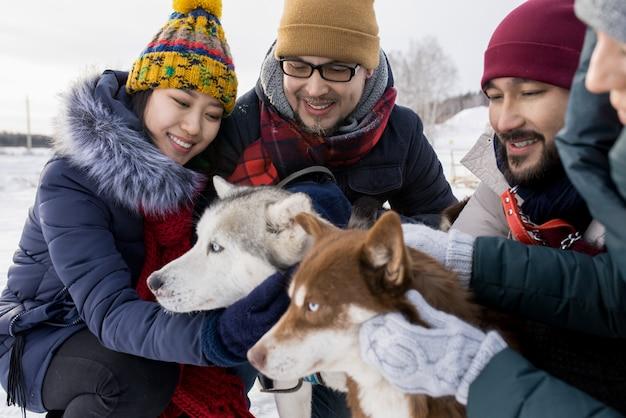 Casais jovens brincando com cães husky