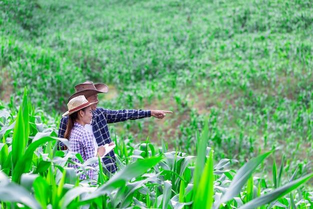 Casal agricultor e pesquisador analisando a planta de milho