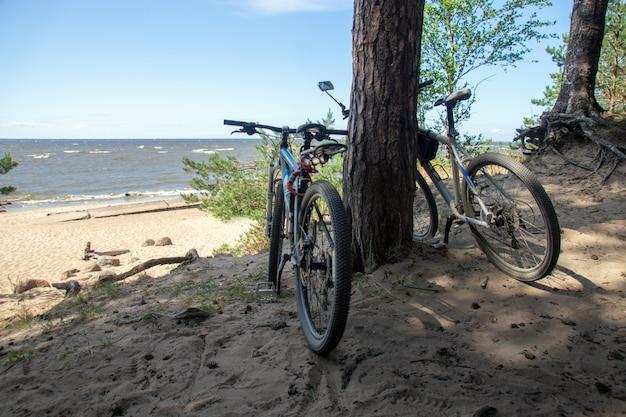 Casal de bicicletas em pé debaixo de pinheiros em uma praia arenosa em um dia ensolarado de verão