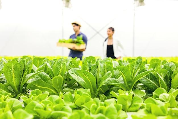 Casal de fazendeiros asiáticos trabalha em uma fazenda com uma estufa de vegetais hidropônicos com felicidade e alegria na fileira de plantas de fundo