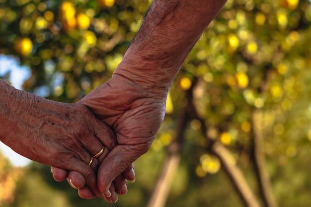 Casal de idosos de mãos dadas, com árvore desfocada