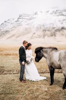 Casal de noivos depois com cavalos, o noivo abraça a noiva, destino, foto de casamento da islândia