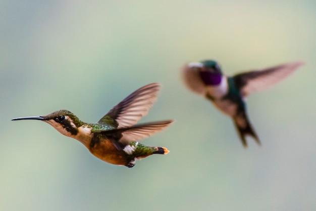 Casal de pássaros cantarolando