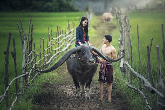 Casal fazendeiro em terno de agricultor com búfalo em campos de arroz