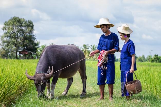 Casal fazendeiro em terno de agricultor com campos de arroz