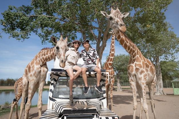 Casal fazendo um passeio de ônibus, alimentando e brincando com a girafa no zoológico safari parque aberto.