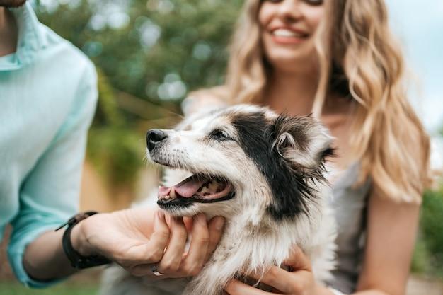 Casal feliz brincando com seu cachorro no quintal na grama. cachorro velho alegre
