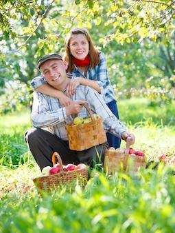 Casal feliz colhendo maçãs no jardim