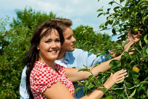 Casal feliz, verificando as maçãs em uma árvore
