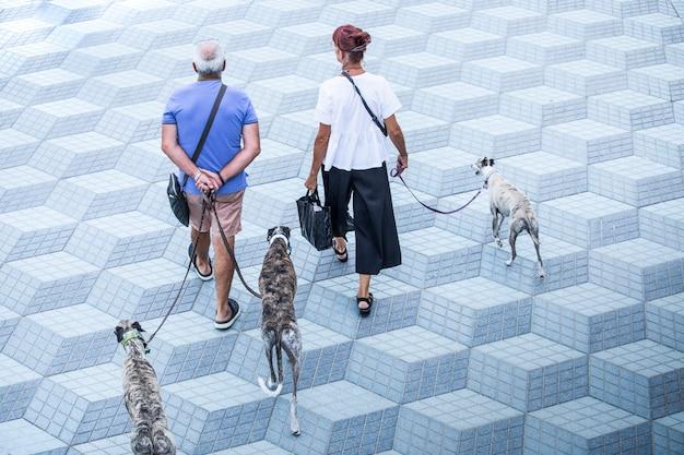 Casal homem e mulher, adultos andando tranquilamente, com três cães, uma tarde de verão, lugar minimalista