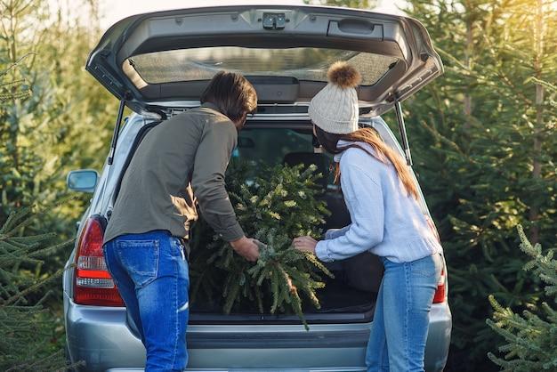 Casal jovem e adorável colocando no porta-malas do carro uma bela árvore de abeto no plantio de árvores de natal