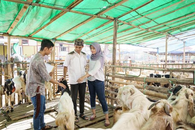 Casal muçulmano em uma fazenda de comércio de animais comprando uma cabra para a cerimônia de sacrifício eid adha