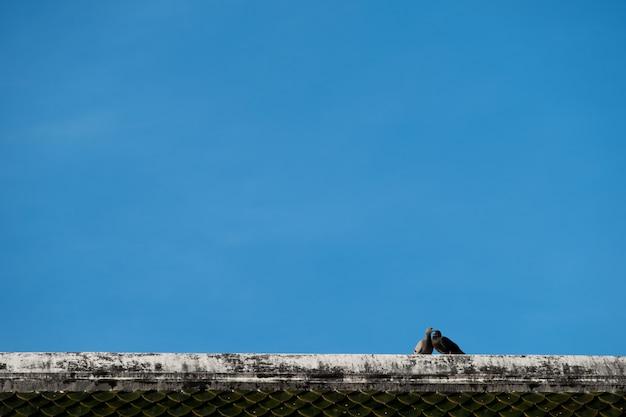 Casal pássaro está no topo do telhado contra o céu azul
