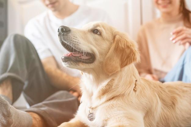 Casal próximo com cachorro dentro de casa
