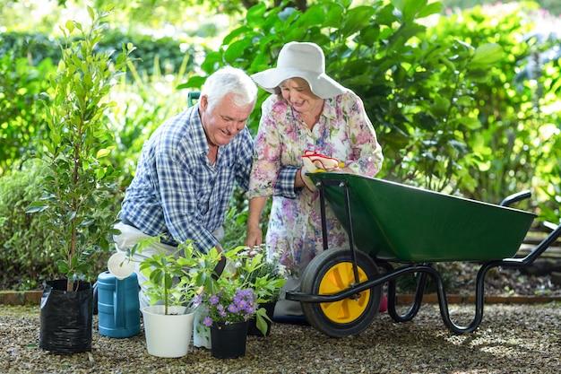 Casal sênior plantando em vasos por carrinho de mão