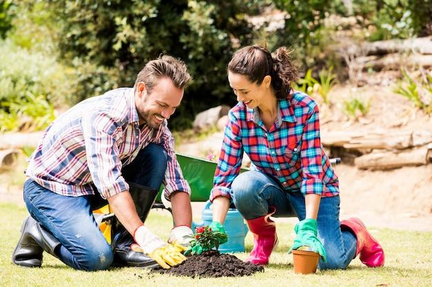 Casal sorridente, plantando no gramado