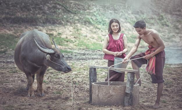 Casal tailandês usando um poço com um búfalo