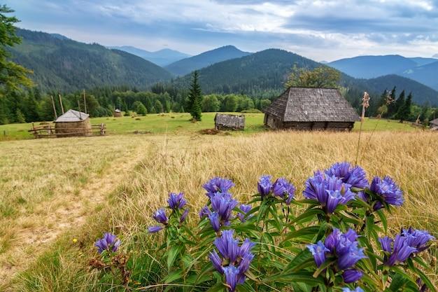 Casas abandonadas de madeira, nas montanhas dos cárpatos. parque nacional de synevir.