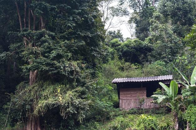 Casas antigas com cana na floresta