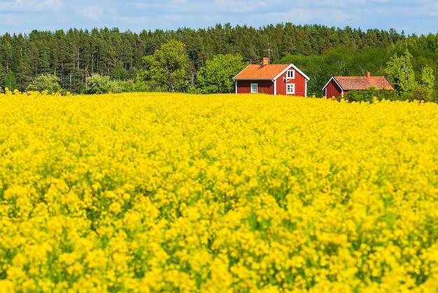 Casas de fazenda em um campo cheio de flores amarelas com árvores em cena na suécia
